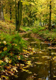 Autumn in park. Photo of autumn park in Sedlčany royalty free stock photo