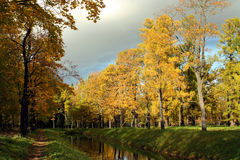 Autumn park. With golden trees and dark sky Stock Photography