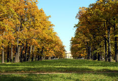 Autumn park. With golden trees and bright sky Royalty Free Stock Image