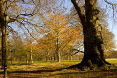 Autumn in the park. Autumn in the Prospect park, New York stock photography