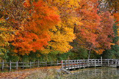 Autumn In The Park. Trees Positively Ablaze With Color During Autumn In The Park, Walking Path, Fence And Pond, Sharon Woods, Southwestern Ohio Royalty Free Stock Photo