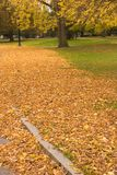 Autumn in the Park. Autumn Leaves Falling in the Park Stock Photography