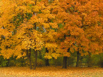 Autumn park Royalty Free Stock Photos