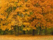 autumn park Zdjęcia Royalty Free