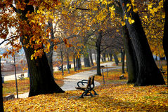 autumn park Obraz Royalty Free