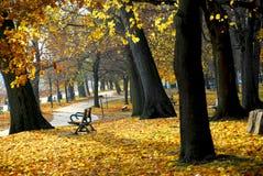 Autumn park royalty free stock photography