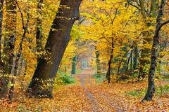Autumn in park. Pathway in the autumn park Stock Photo