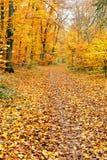 Autumn park. Image of the autumn park Stock Photo