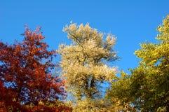 Autumn park. Beautiful tree in autumn park, Uman, Sofiyivka, Ukraine Stock Image