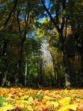 Autumn in park Royalty Free Stock Image