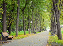 Autumn park. Yellow autumn park, tree avenue Royalty Free Stock Images