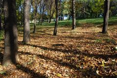 Autumn at the park stock photography