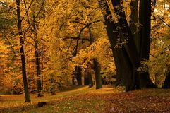 Autumn park. Beautiful autumn park with trees Stock Photo