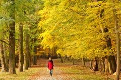In autumn park Stock Photo