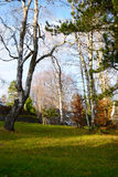 Autumn in park. Beautiful autumn sunny day in the countryside park Stock Photos