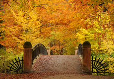The autumn park Stock Image