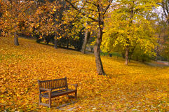 Autumn park. Wooden bench in autumn park Royalty Free Stock Images