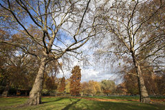 Autumn park. A leafy park in Autumn late in the afternoon Stock Photography