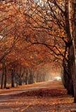 autumn park Στοκ Φωτογραφία