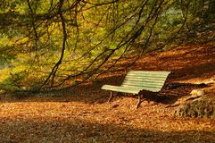 Autumn at the park. Autumn: a park bench illuminated by the Sun Stock Images