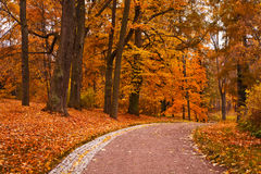 Autumn park Stock Image