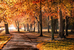 Autumn in the park. Colorful foliage in the autumn park Stock Photo