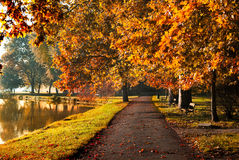 Autumn in the park. Colorful foliage in the autumn park stock image