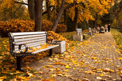 Autumn park. The perspective of the row of benches in autumn park while fall with walking people in background Royalty Free Stock Photos