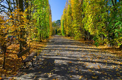 Autumn in park. Beautiful autumn in Polish park Royalty Free Stock Photography