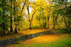 Autumn park. With yellow foliage Royalty Free Stock Photography