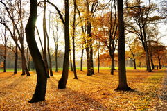 Autumn park. With yellow and red foliage and benches Royalty Free Stock Images