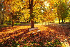 Autumn park. With yellow and red foliage and benches Stock Photos