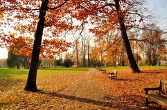 Autumn park. With yellow and red foliage and benches Stock Photography