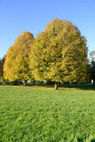 Autumn in a park Stock Photography