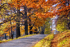 Autumn in park. Sunlit forest path in autumn. Fall season in Europe Stock Images
