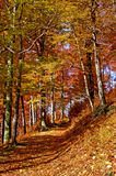 Autumn in park. Sunlit forest path in autumn. Fall season in Europe Stock Photo