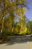 autumn park Fotografia Stock