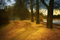 Autumn park. Late autumn in the park royalty free stock photo