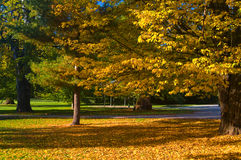 Autumn in an park Royalty Free Stock Photography