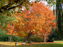 Autumn in the park. Autumn in a german park Royalty Free Stock Photos