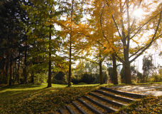 Autumn in the park Royalty Free Stock Photos