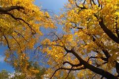 Autumn in the park Stock Photo