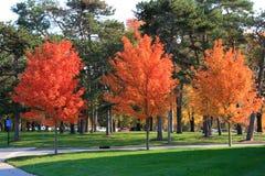 Autumn at park Royalty Free Stock Photo