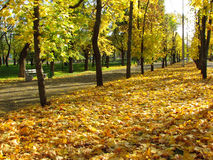 Autumn park Royalty Free Stock Photography