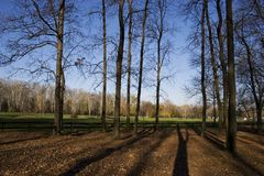 Autumn in park. Late autumn in park. Long shadow of trees and blue sky Royalty Free Stock Photo
