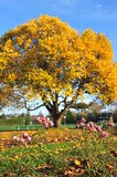 Autumn park Stock Images