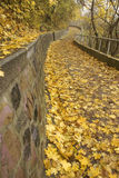Autumn in park Stock Image