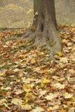 Autumn in park. Kiev. On slopes of Dnepr. 2008 Stock Image