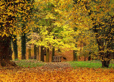 Autumn park. And colour foliage royalty free stock photo