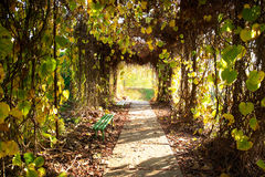 Autumn park alley Royalty Free Stock Images